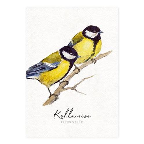 Postkarte-Kohlmeise