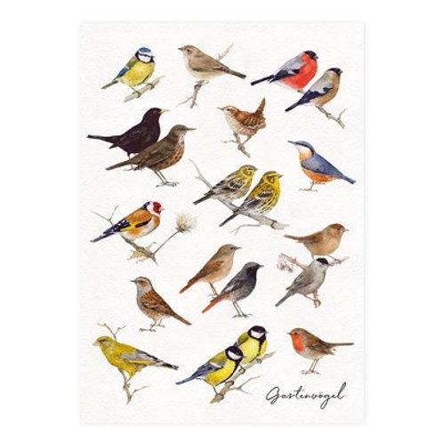 Postkarte Gartenvögel