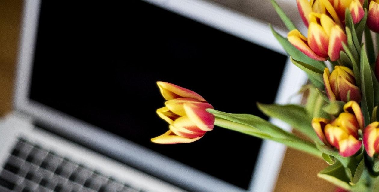blog maisflorporfavor da the rose garden