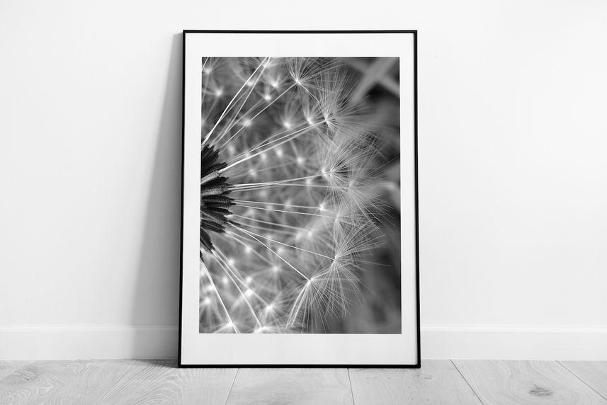 'dandelion'