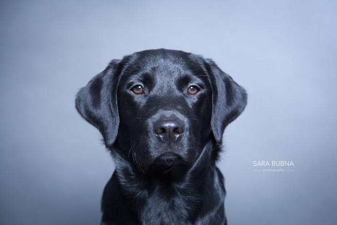 Hundefotos - Iago & Eddie