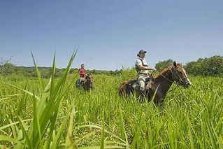 Outback trails horseback riding.jpg