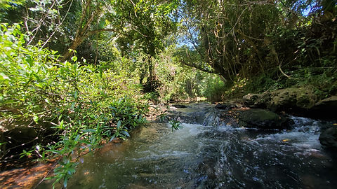 Fresh Water Creek Hopkins .jpg