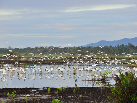 Hopkins Wetland is a Birders Paradise in Southern Belize