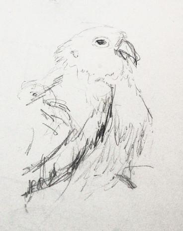 oiseaux_5.jpg