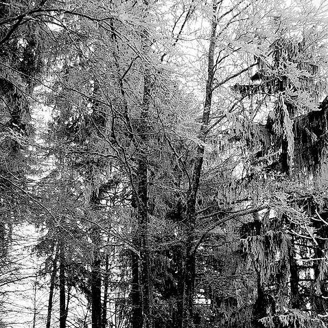 image3_snow.jpg