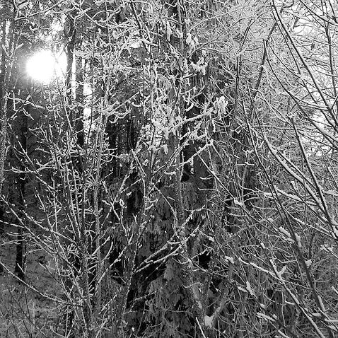 image2_snow.jpg