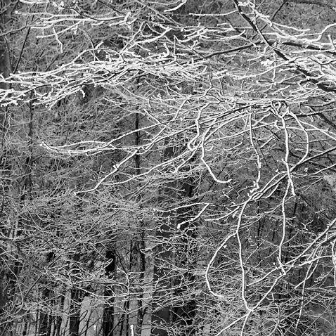 image4_snow.jpg