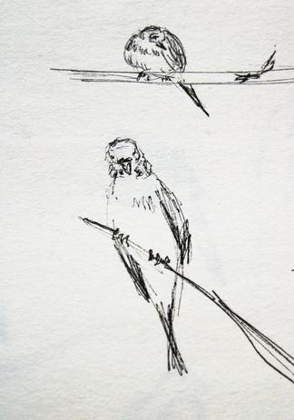 oiseaux_1.jpg
