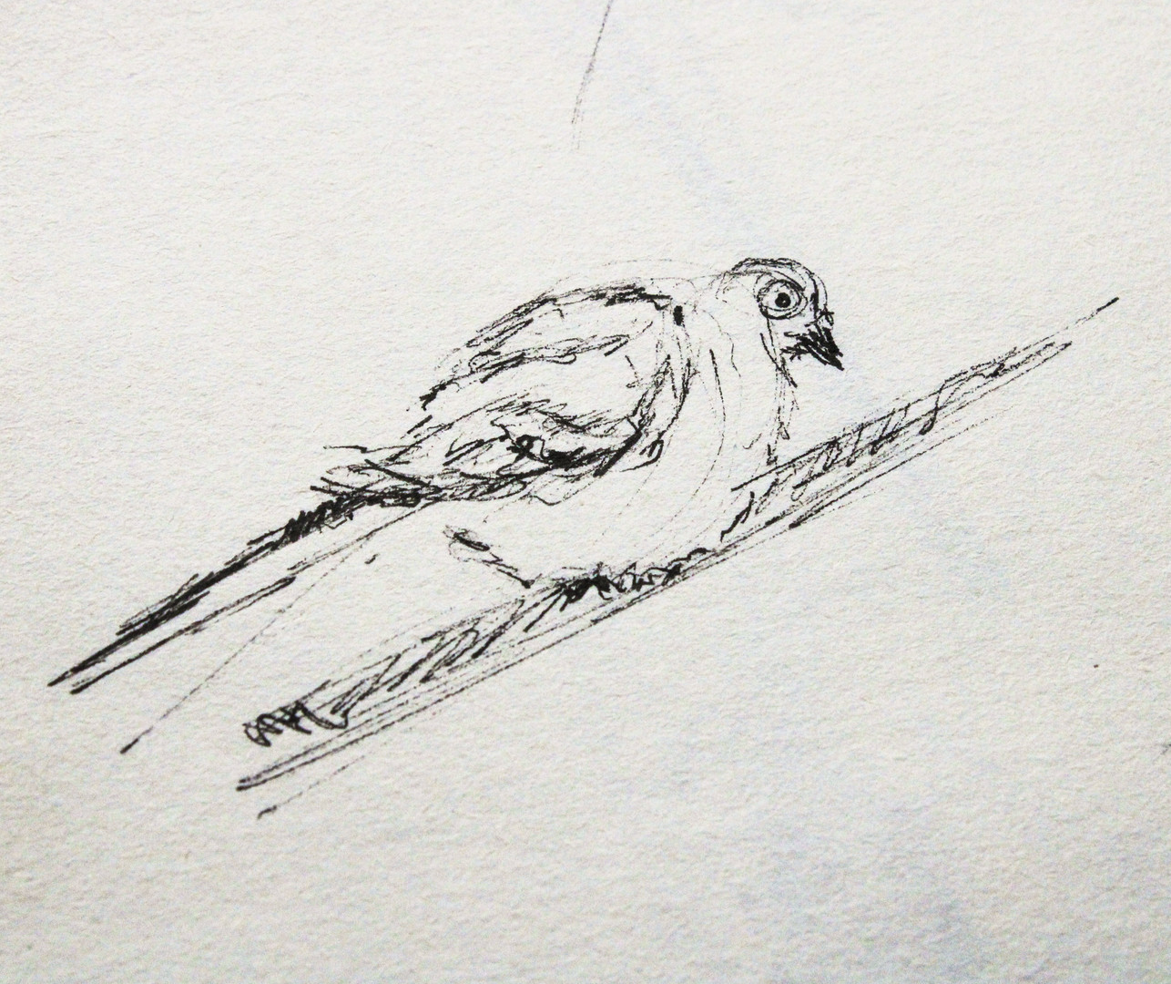 oiseaux_4.jpg