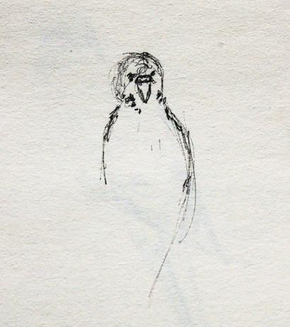 oiseaux_2.jpg