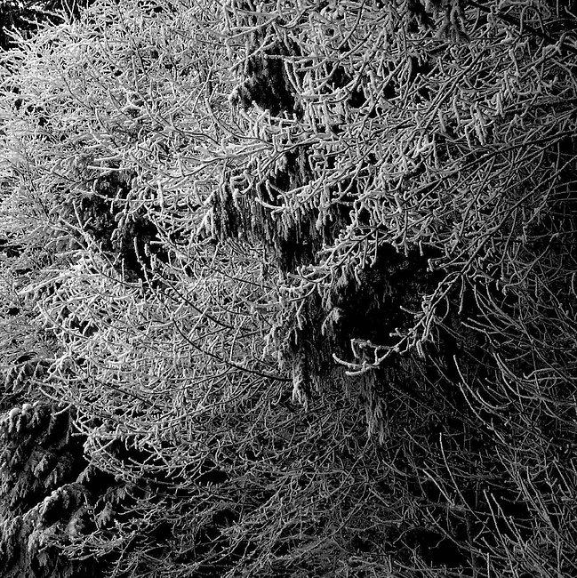 image5_snow.jpg