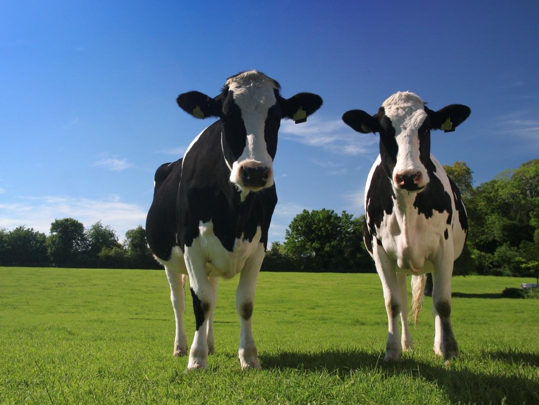 Dairy & Herd Management