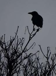 """The crow shrieks warning."""
