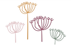 New flower heads.PNG