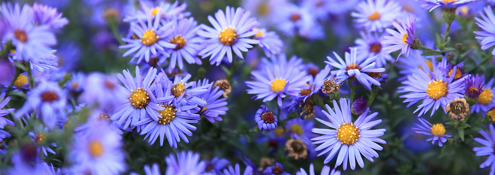 Aster post Feature image.png