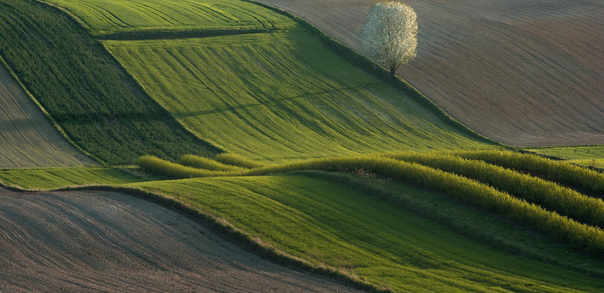 """Zdjęcie z tomiku wierszy """"Dopóki ptaki śpiewają"""" Małgorzata Chomont, 2019 r. """"Zielone dywany""""  Fragment wiersza:  """"...a gdy oczy moje zielonością się przepełniają, gdzieś w mojej duszy powstaje pytanie. Czy tam w niebie też mają takie zielone dywany?..."""""""
