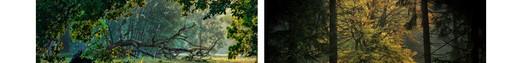 Wystawa fotografii - Biblioteka Norwida, Zielona Góra