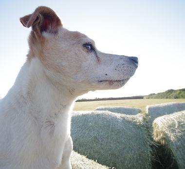 Newquay, truro, Cornwall. Holiday Cottage, farmstay, dog friendly