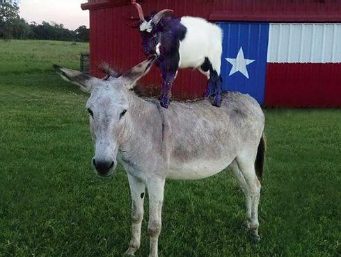 triple-l-glamour-goat-company-goat-milk (1)_edited_edited_edited.png