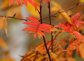 Autumn leaves small.jpg