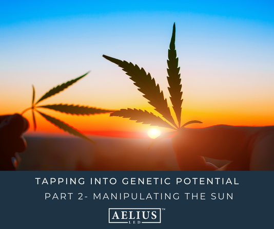 TAPPING INTO GENETIC POTENTIAL PART TWO: MANIPULATING THE SUN