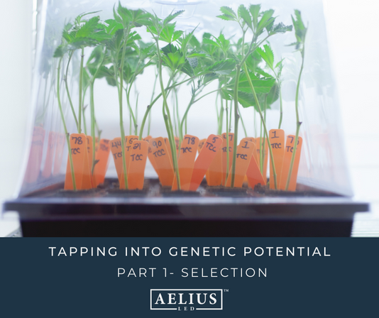TAPPING INTO GENETIC POTENTIAL PART ONE: SELECTION