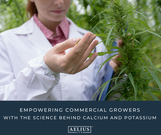 Nutrients Part 2: Empowering Commercial Growers with the Science Behind Calcium and Potassium