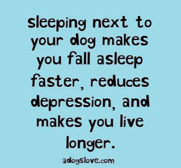 Loving Your Dog Does Your Heart Good!