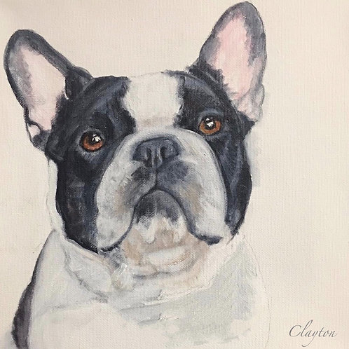 French Bulldog Black/White