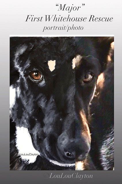 Major dog portrait