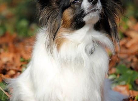 LouLou Clayton's Custom Pet Portraits