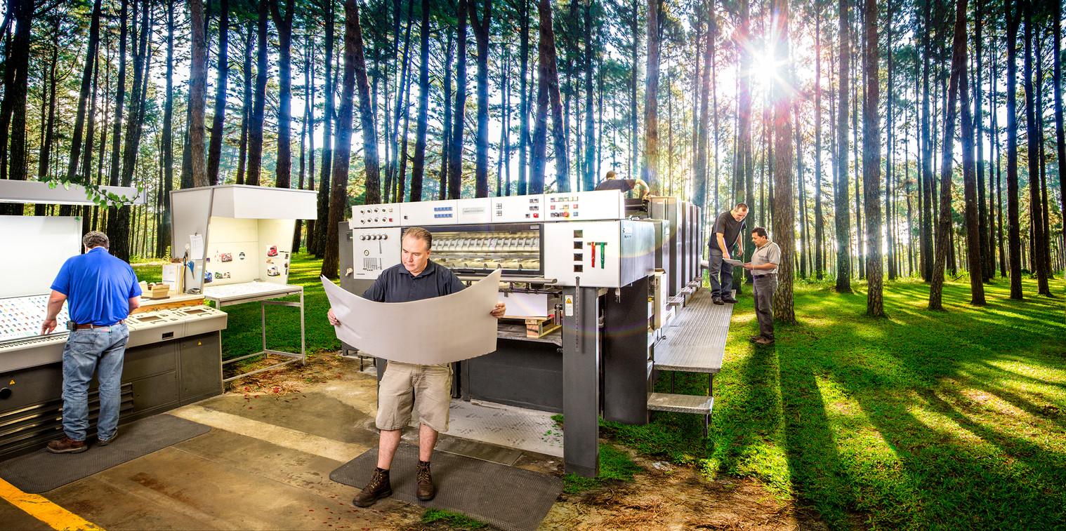 Domtar Forest.jpg