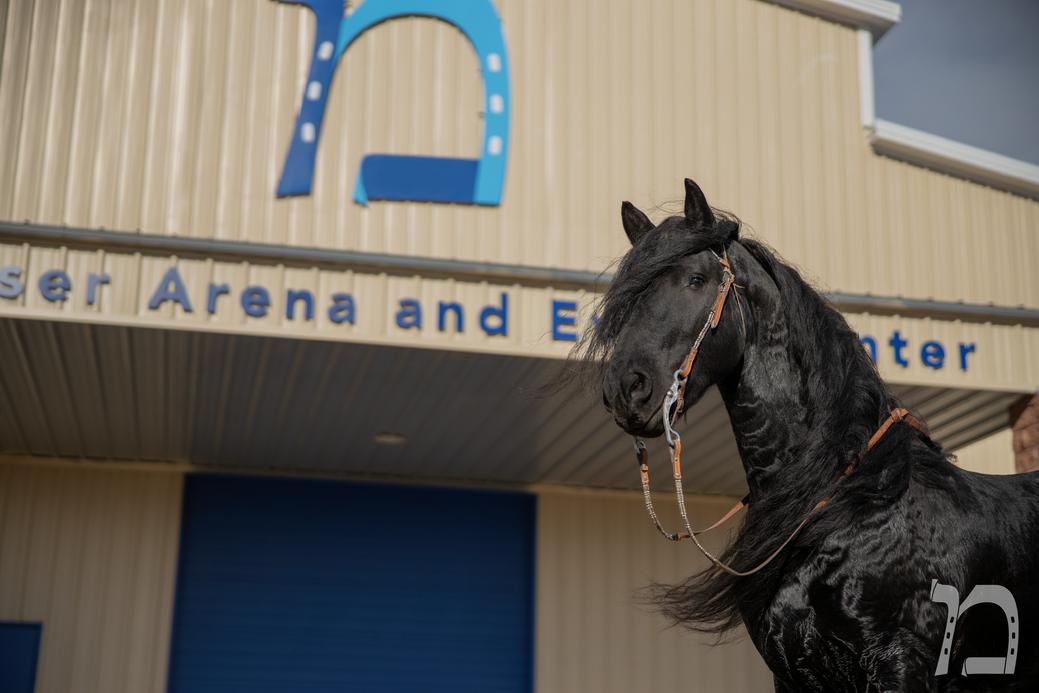 Messer Arena 13_Logo.png