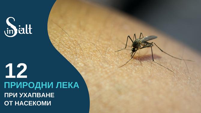 12 природни лека при ухапване от насекоми