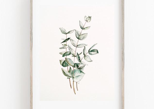 EucalyptusFrame.jpg