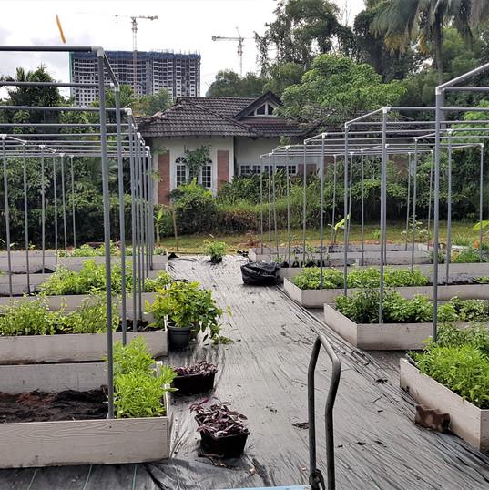 Planting in progress.jpg