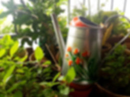 watering can.jpeg