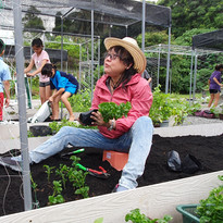 Transplanting Spinach