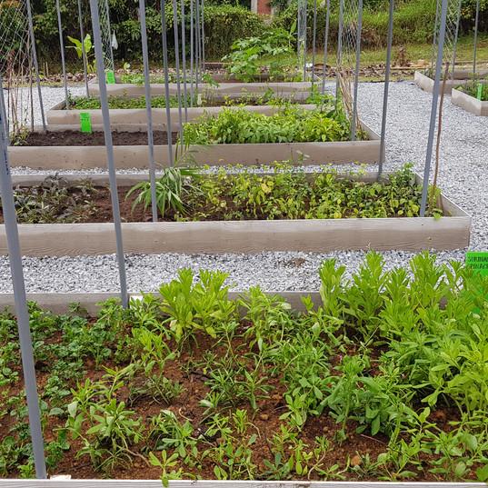 Vege beds in a row.jpg