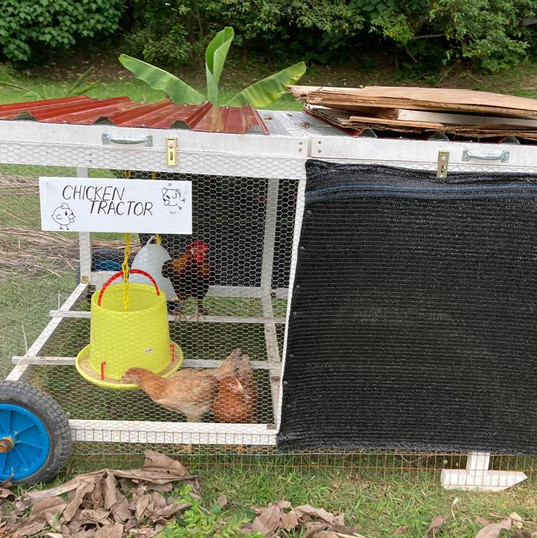 ChickenTractor.jpeg
