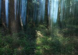 Green_Curtain©Joanna_Vortmann_(11)