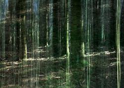 Green_Curtain©Joanna_Vortmann_(9)