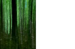 Green_Curtain©Joanna_Vortmann_1