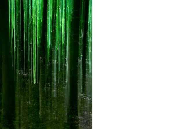 Green_Curtain©Joanna_Vortmann(1)_66x92.jpg