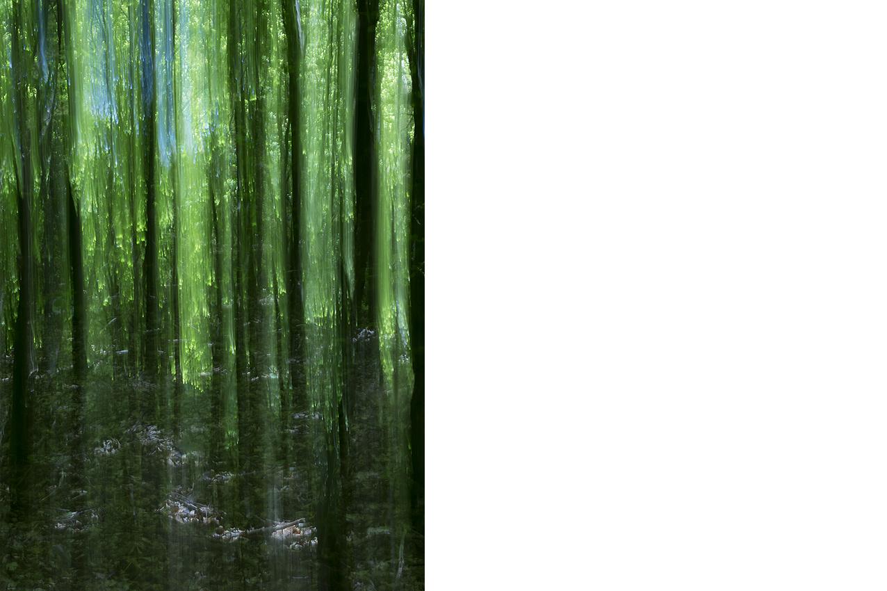 Green_Curtain©Joanna_Vortmann_2