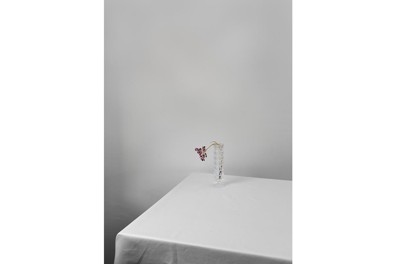 """gedenke! Tulpe """"Verschwendung"""" © joanna vortmann"""