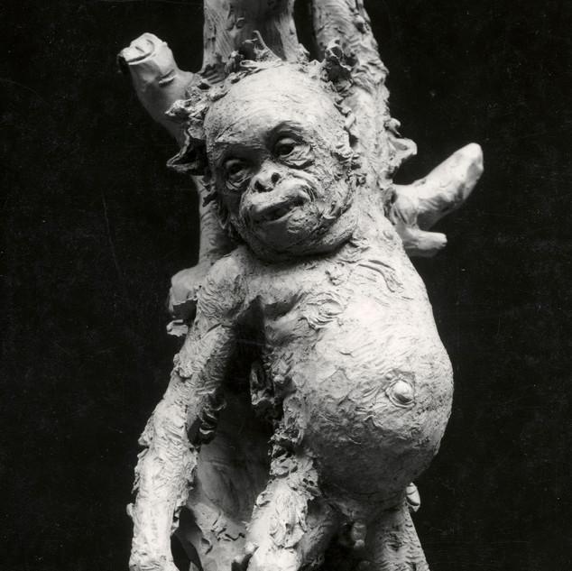 Cadell d'orangutan