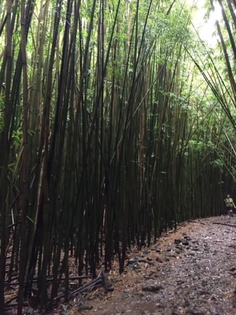 Pipiwai Trail, Waimoku Falls. Wodospad Waimoku, Ścieżka Pipiwai.