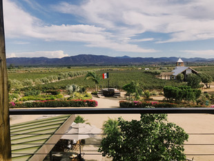 Finca La Carrodilla the only producer of  CCOF certified organic wines in the Valle.